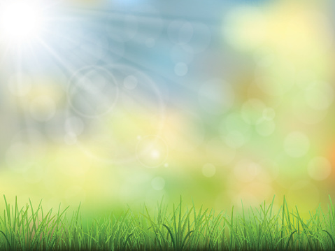 spring nature background grass