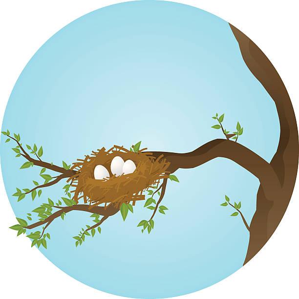 bildbanksillustrationer, clip art samt tecknat material och ikoner med spring nest - bo
