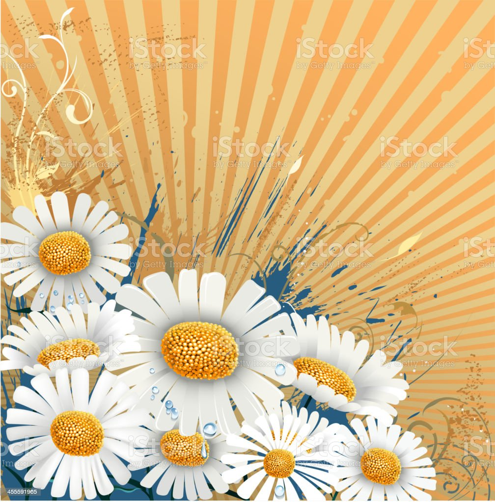 spring of daisy backround royalty-free spring of daisy backround stock vector art & more images of abstract