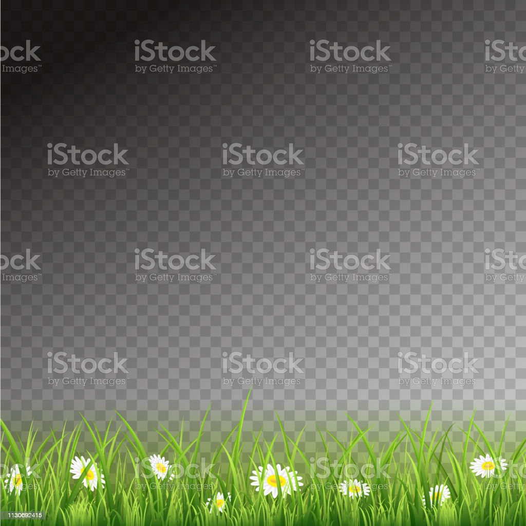 Spring Or Summer Grass With Flowers On Transparent