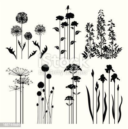 Silhouettes of variable spring plants.