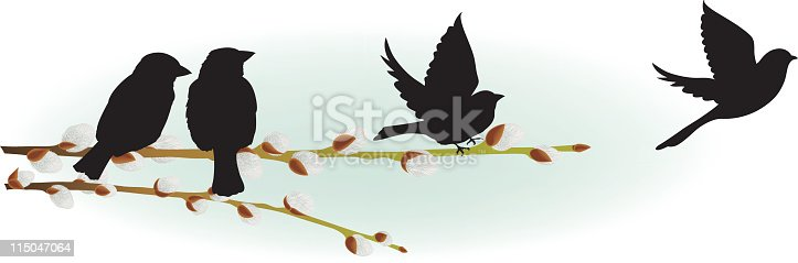 Spring Pussy Willow & Sparrows.  Two willow branches with open buds.horizontally with two perching black sparrow silhouettes.  There are also two flying sparrow silhouettes on the right.  The image is isolated on white with light green background.
