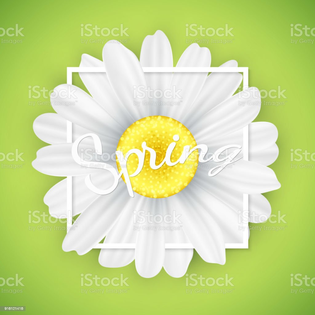 Bandera De Temporada De Primavera Flor De Manzanilla En Marco Blanco ...