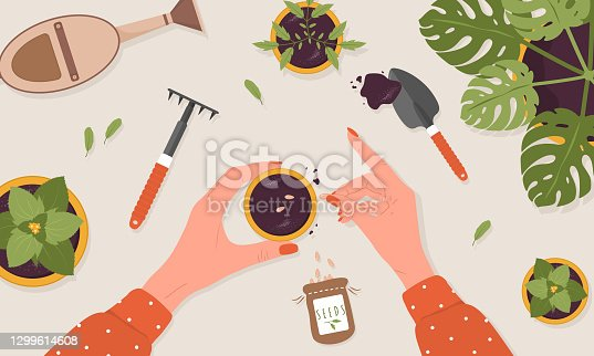 istock Spring seedlings. Woman plants seeds in the ground. The view from the top. Vector illustration in flat cartoon style. Domestic orangery and care concept. Gardening hobby 1299614608