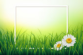 Spring summer background with fresh green grass and daisy camomile flowers. Vector illustration