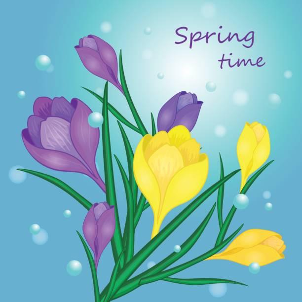 illustrations, cliparts, dessins animés et icônes de temps de printemps fleur-01 - crocus