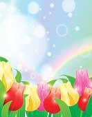 Colorful Spring Tulip Background.