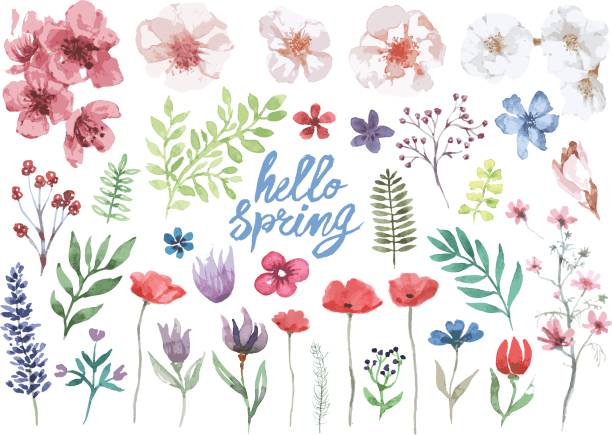 Lente aquarel bloemen collectie​​vectorkunst illustratie