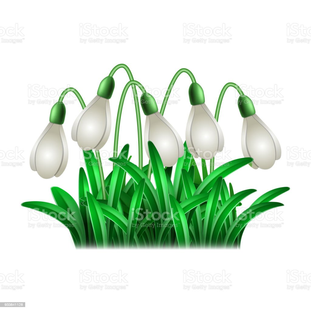 Spring White Flowers Of Snowdrops Stock Vector Art More Images Of