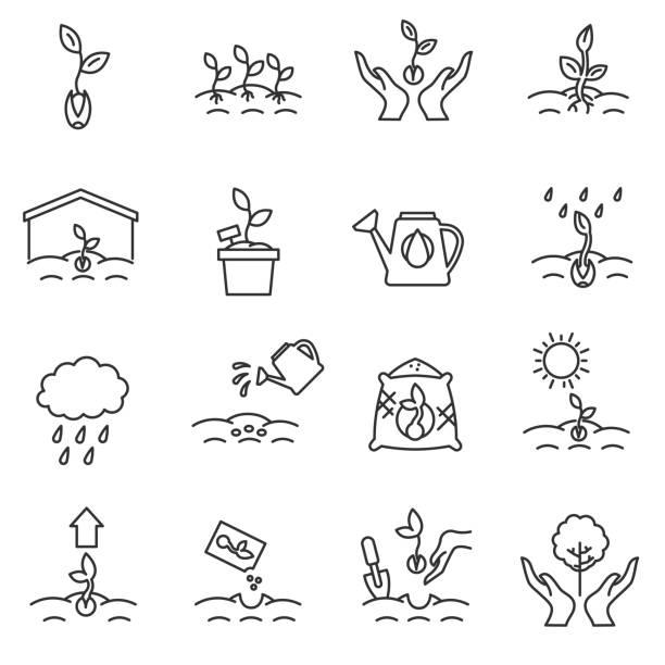 發芽的圖示集。可編輯的中風。 - 植物 幅插畫檔、美工圖案、卡通及圖標