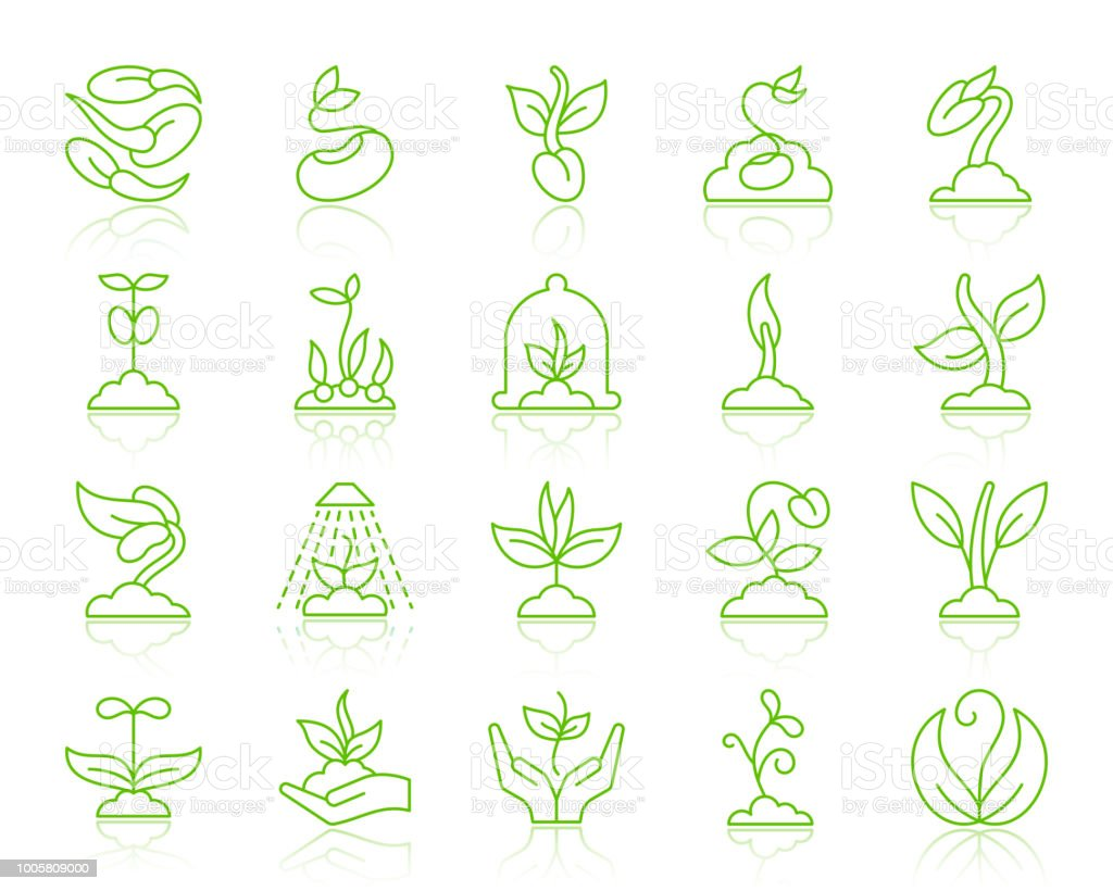 Sprout simple color line icons vector set vector art illustration