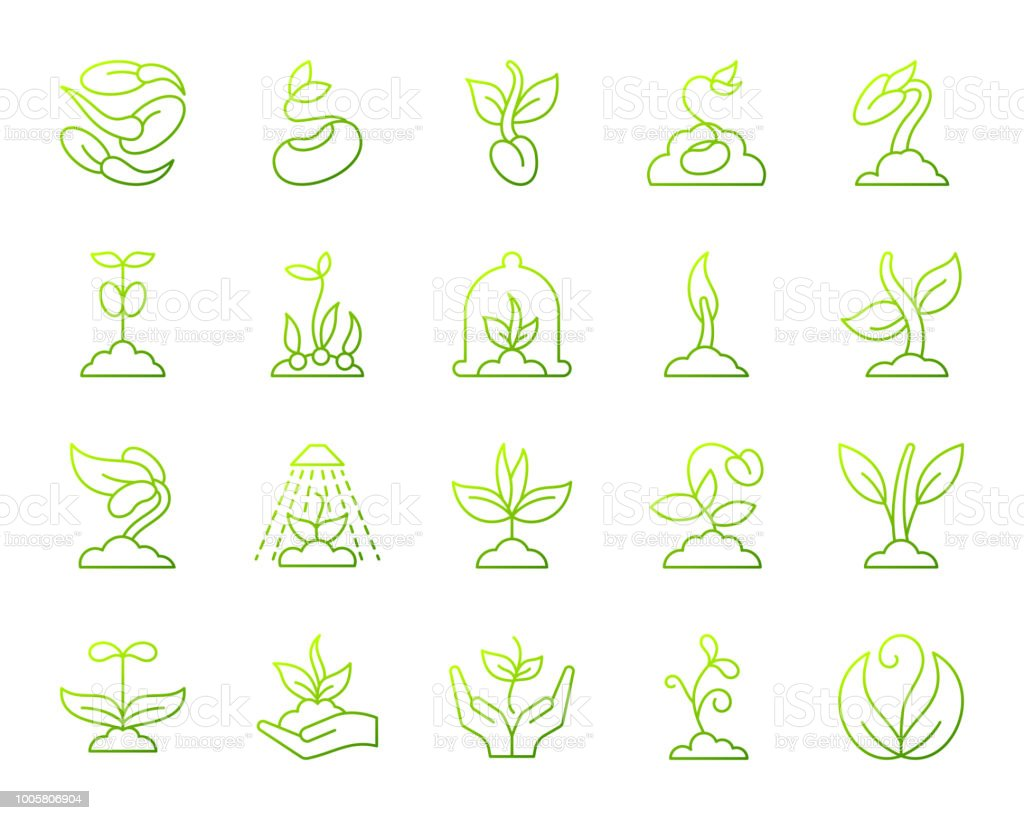 Sprout simple green line icons vector set vector art illustration