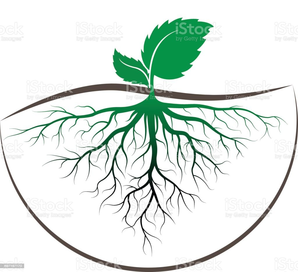 Sprout Tree With Root Stock Vector Art & More Images of Abstract ...