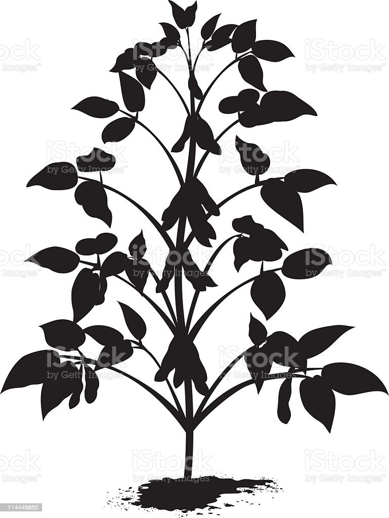 sprouted soybean plant silhouette with leaves and bean pods stock rh istockphoto com