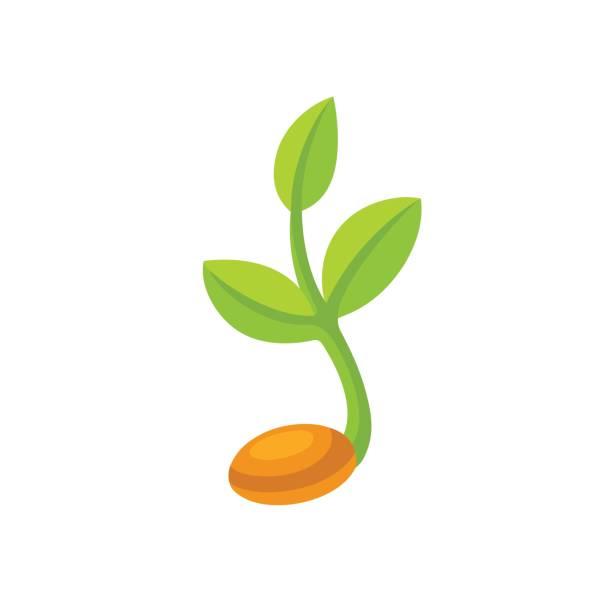 Sprouting seed illustration vector art illustration