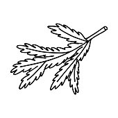 istock Spruce branch in Doodle style. The sketch is hand-drawn and isolated on a white background. Element of new year and Christmas design. Outline drawing. Black-white vector illustration. 1283694910