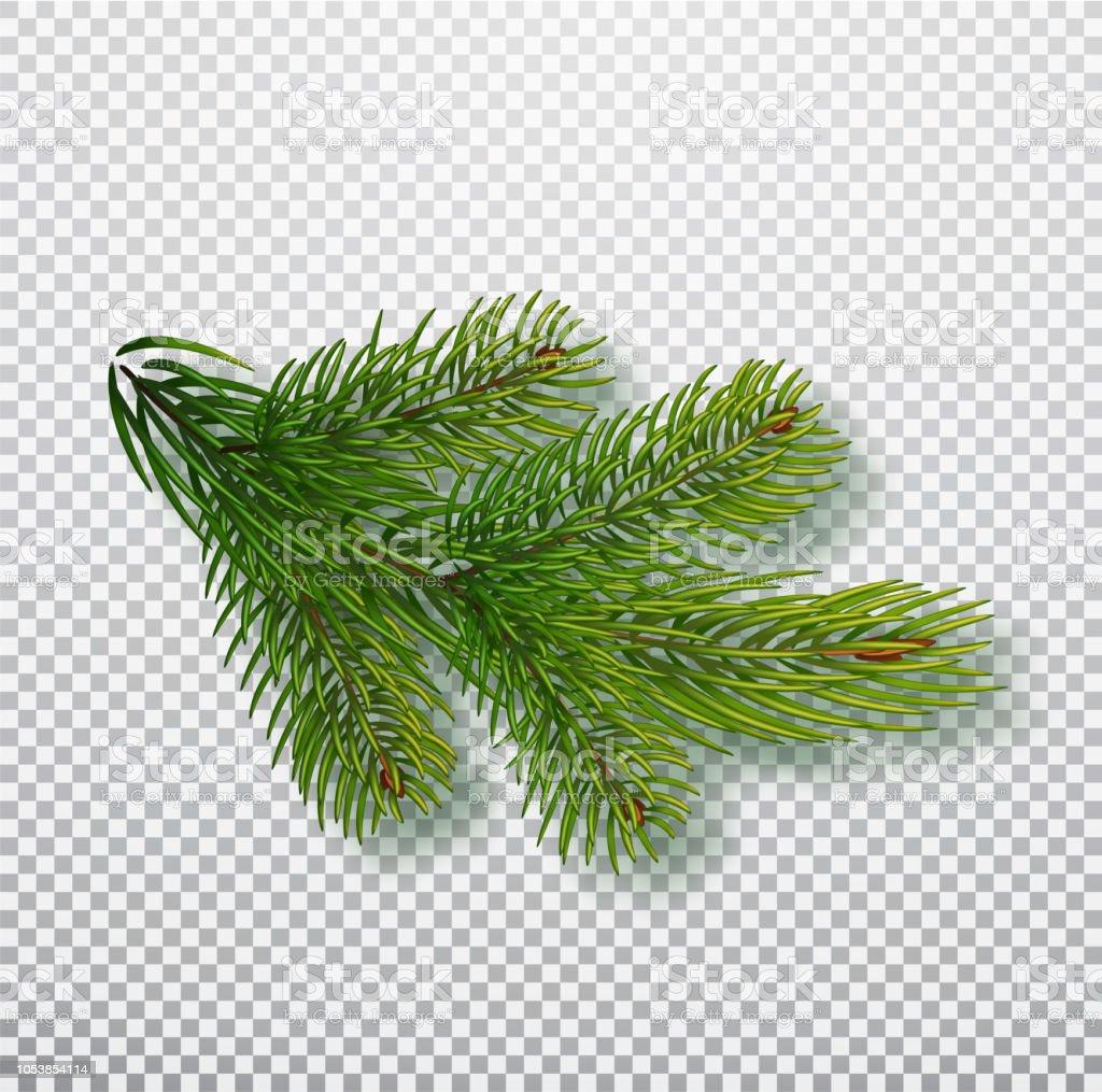 Weihnachtsbaum Ast.Fichte Ast Auf Hintergrund Isoliert Weihnachtsbaum Zweig