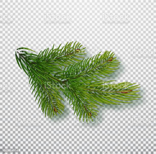 Spruce branch isolated on background christmas tree branch realistic vector id1053854114?b=1&k=6&m=1053854114&s=612x612&h=igwslpkll6eg8ahhn9u8zi7ffm07dzyl712wdnsqi6y=