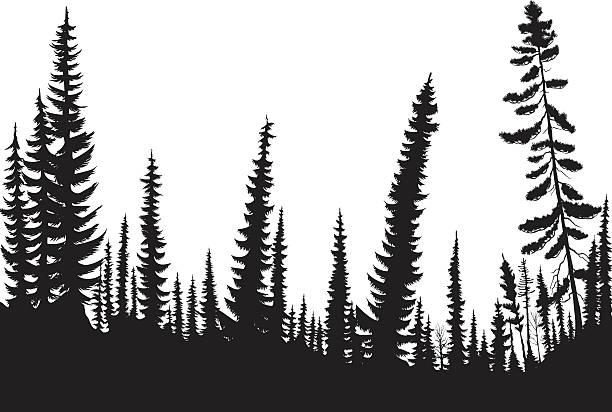 stockillustraties, clipart, cartoons en iconen met spruce forest - pinaceae