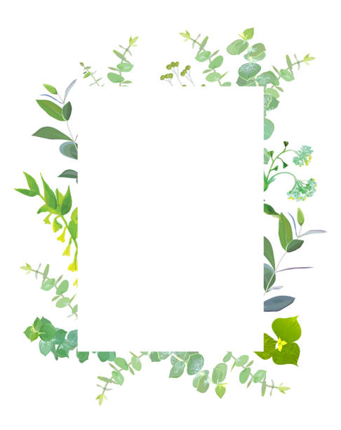 Square botanical vector design frame Square botanical vector design frame. Baby blue eucalyptus, capsella, meadow wildflowers, various plants, leaves, greenery and herbs.Natural greenery rustic card.All elements are isolated and editable flowerbed stock illustrations