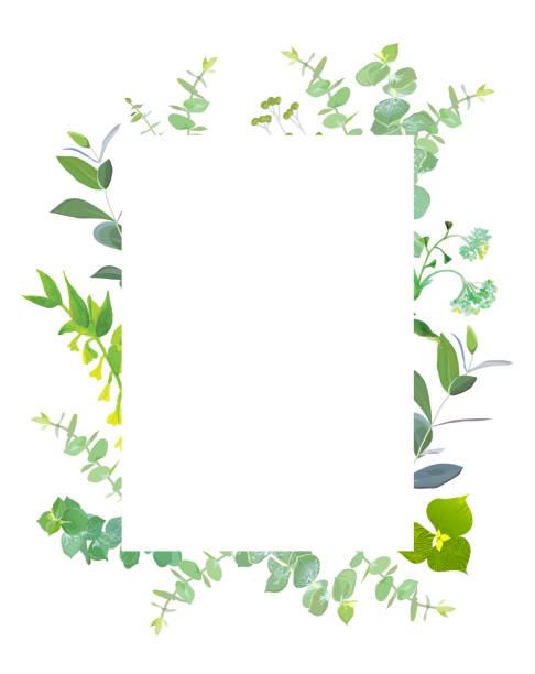 quadratische botanische vektor-design-rahmen - kräutermischung stock-grafiken, -clipart, -cartoons und -symbole