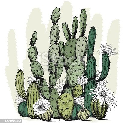 istock Square card with green cactus plants and flowers. 1132986053