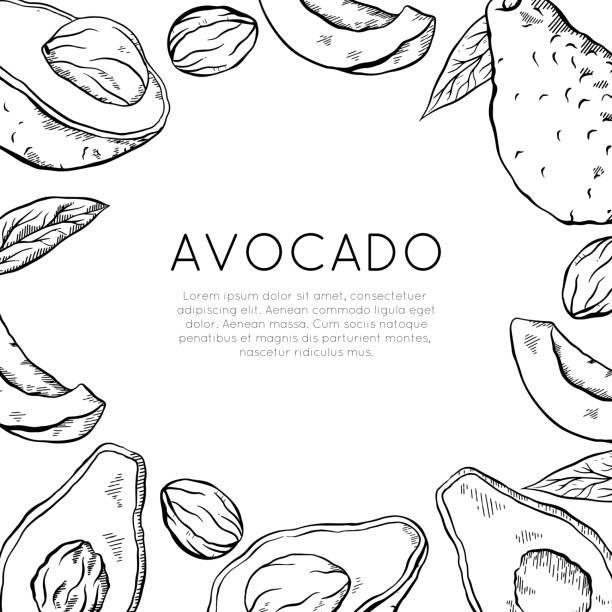 Square card with sketch avocado and place for text. Healthy keto diet. Vegetarian engraving banner. Vector outline template Square card with sketch avocado and place for text. Healthy keto diet. Vegetarian engraving banner. Vector outline template for greeting cards, menu, recipes and your design. avocado borders stock illustrations