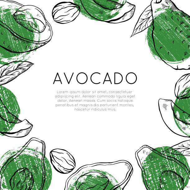 Square card with sketch avocado with green grunge spots and place for text. Healthy keto diet. Vegetarian engraving banner. Vector outline template Square card with sketch avocado with green grunge spots and place for text. Healthy keto diet. Vegetarian engraving banner. Vector outline template for greeting cards, menu, recipes and your design. avocado borders stock illustrations