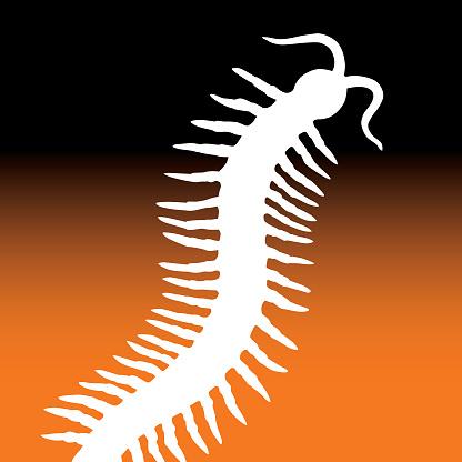 Square Halloween Centipede Icon