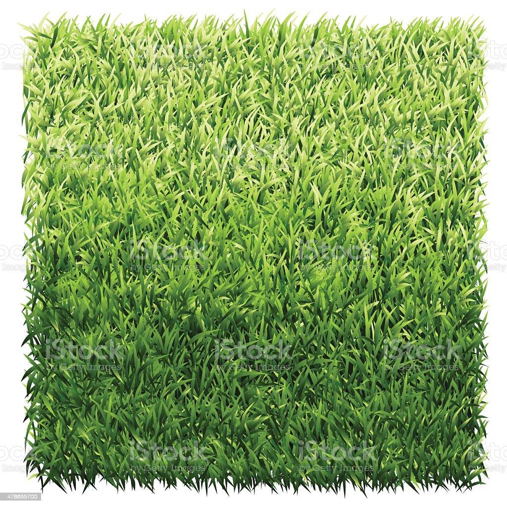 Square of Green Grass vector art illustration