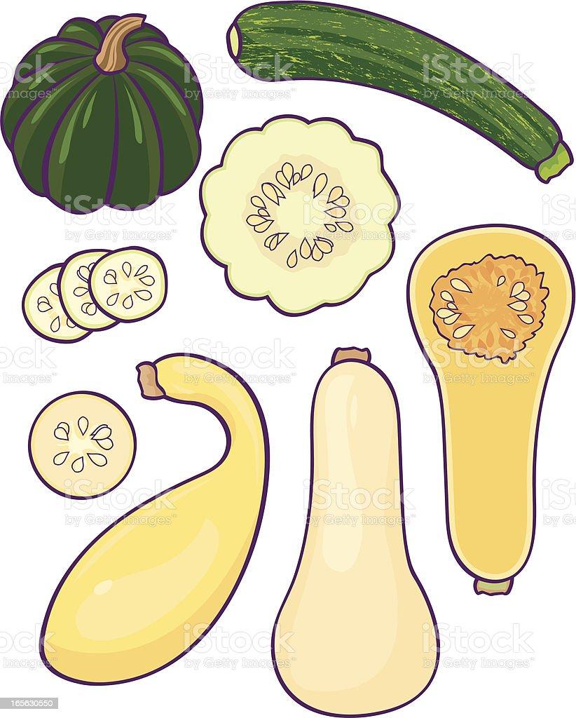 Squash vector art illustration
