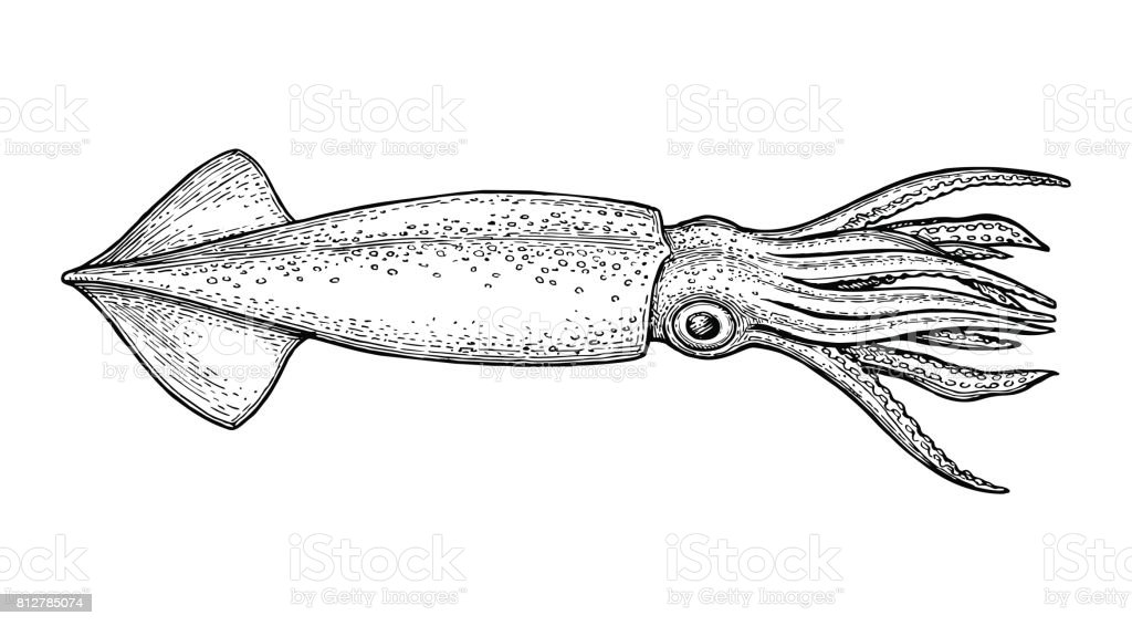 Squid ink sketch. Squid ink sketch. Isolated on white background. Hand drawn vector illustration. Retro style. Animal stock vector
