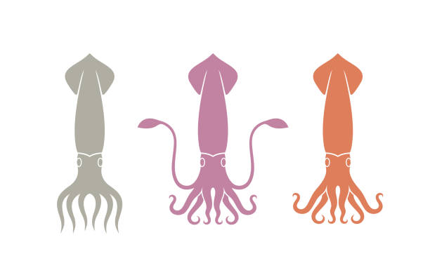 tintenfisch-logo. isolierte tintenfisch auf weißem hintergrund - kalamar stock-grafiken, -clipart, -cartoons und -symbole