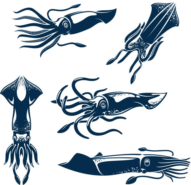 bildbanksillustrationer, clip art samt tecknat material och ikoner med squid sea animal icon set for seafood design - calamares