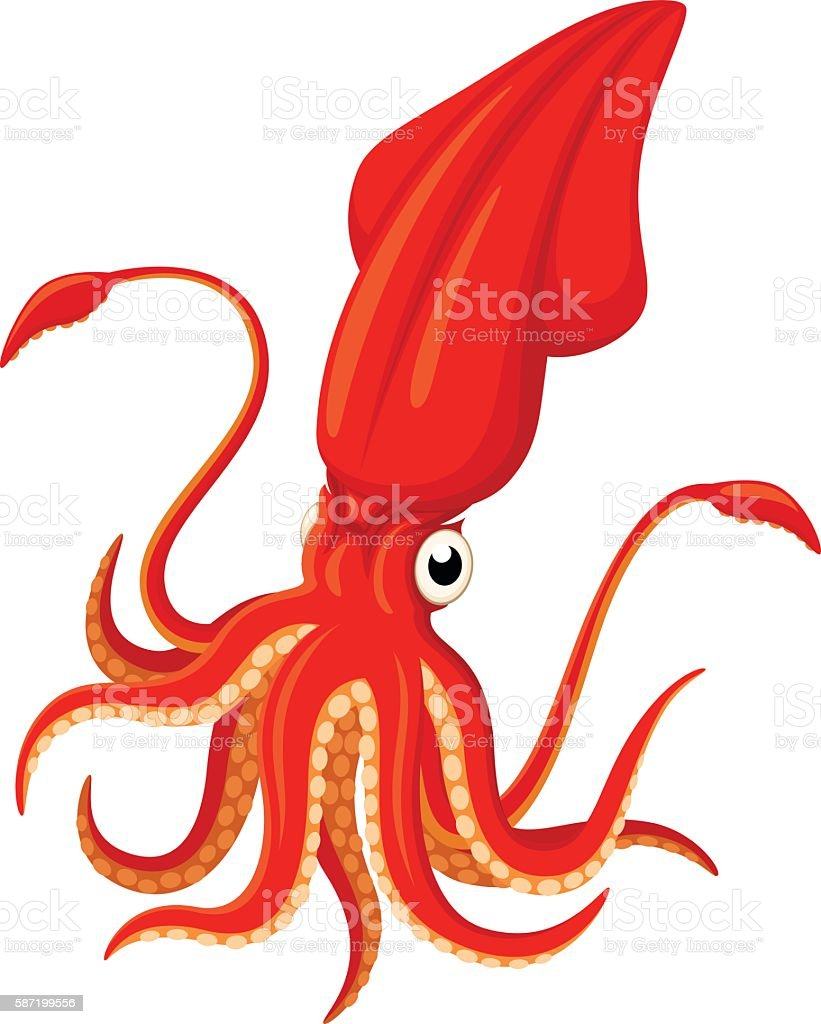 royalty free squid clip art vector images illustrations istock rh istockphoto com squid clip art black and white squid clipart svg
