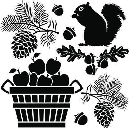 squirrel and bushel of apples