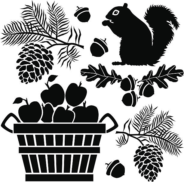 squirrel and bushel of apples A group of vector icons with an Autumn theme featuring a squirrel, pine branches, oak leaves, acorns and a bushel of apples. autumn silhouettes stock illustrations