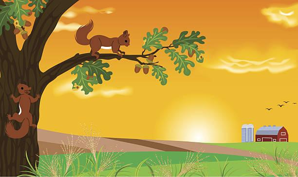 illustrazioni stock, clip art, cartoni animati e icone di tendenza di scoiattolo e tramonto paesaggio - miscanthus sinensis