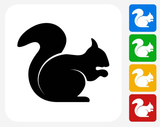illustrations, cliparts, dessins animés et icônes de écureuil icône à la conception graphique - écureui