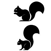 Squirrel icon on white background