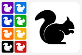 Squirrel Icon Square Button Set. The icon is in black on a white square with rounded corners. The are eight alternative button options on the left in purple, blue, navy, green, orange, yellow, black and red colors. The icon is in white against these vibrant backgrounds. The illustration is flat and will work well both online and in print.