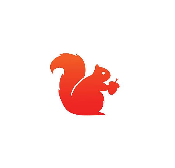illustrations, cliparts, dessins animés et icônes de squirrel icon - écureui