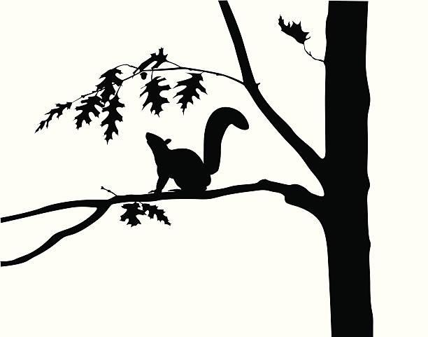 illustrations, cliparts, dessins animés et icônes de squirreloaktree - écureui