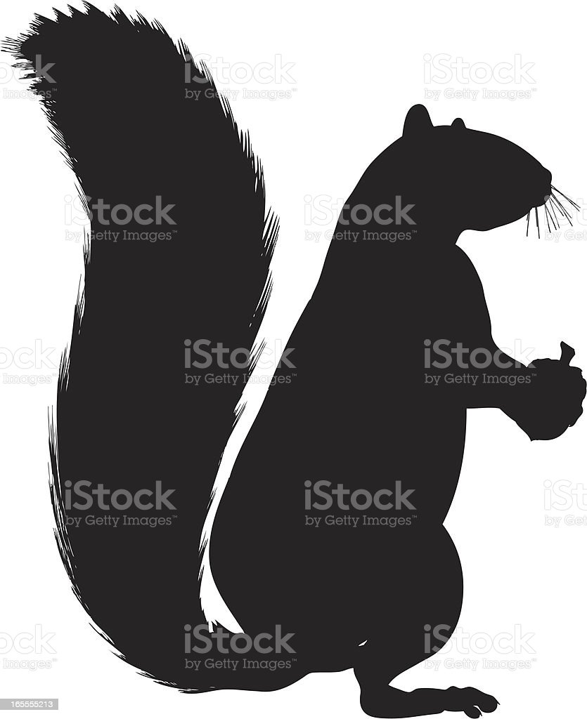 squirrel silhouette on white background royalty free stock vector art
