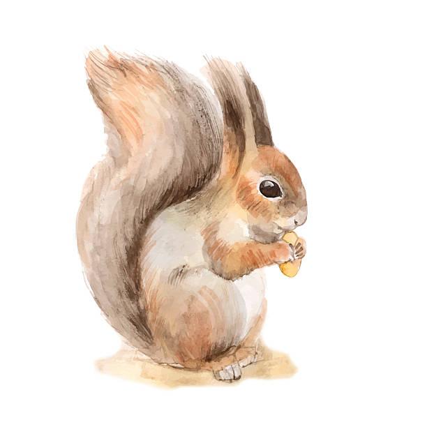 illustrations, cliparts, dessins animés et icônes de écureuil avec une noix. vecteur - écureui