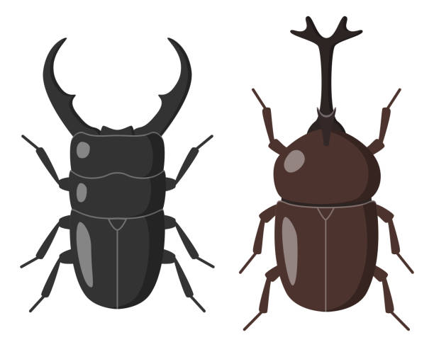 Stag beetle and Japanese horned beetle Illustration of Stag beetle and Japanese horned beetle. beetle stock illustrations