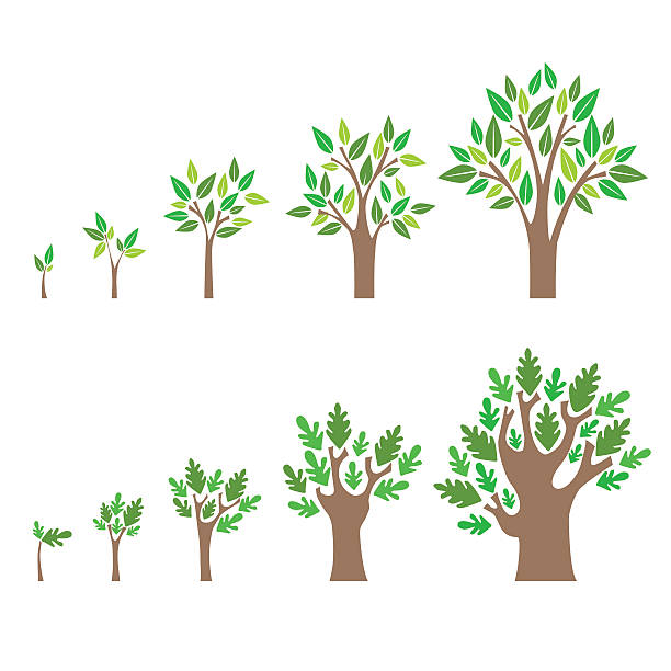 Best Growing Tree Illustrations, Royalty-Free Vector ...