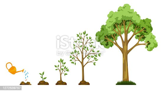 istock Stages growth of tree from seed. Watering the plants. Collection of trees from small to large. Green tree with leaf growth diagram. Business cycle development 1272539757