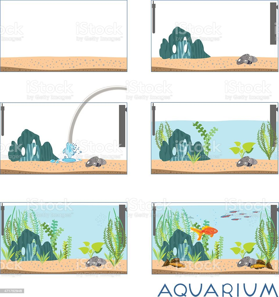 Stages of creating an aquarium vector art illustration