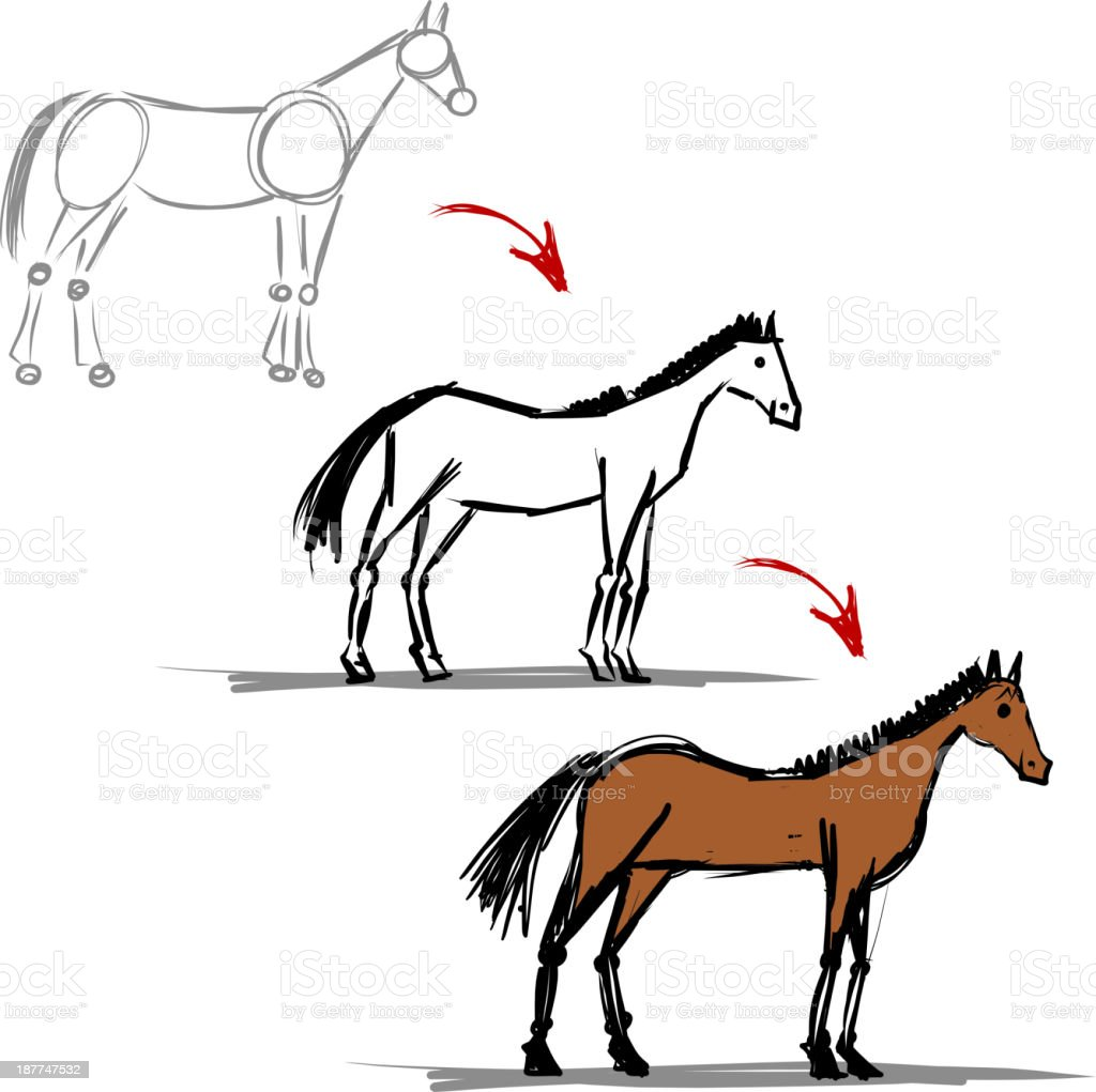 Stages Of Drawing Horse Sketch For Your Design Stock Illustration Download Image Now Istock